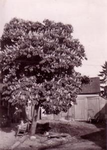 014baum-in-blüte