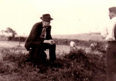 Schafe hüten auf dem Feld